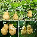 Rare Baby Ginseng Fruit pear seeds Bonsai Ornamental funny herb tree sapodilla Solanum muricatum sementes plants garden --20/bag