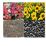 alkarty balsam and sunflower seed 20 pcs