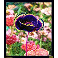 "PixTopper Poppies 04 Paper Poster(Large 44""x44"")"