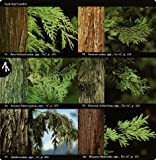 National Audubon Society Field Guide to North American Trees--W: Western Region (National Audubon Society Field Guides (Paperback))