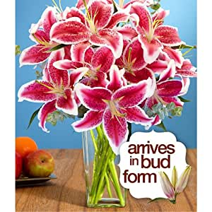 Deluxe Fragrant Stargazer Lilies (with FREE glass vase) - Flowers