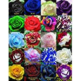20 Seeds Mixed Rare Exotic Rose Flower Seeds,Black Rose,Red Rose,Free Shipping,Rare Rose Flower SeedsRoseFlowerseeds010