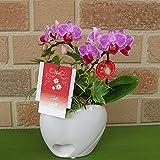 手のひらサイズのミニ胡蝶蘭・リアン 2本立ち:ダブルハート陶器鉢・観葉植物ヘデラ寄せ植え