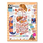 Blueprint for Health Your Digestive S...