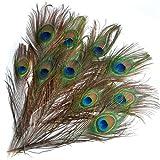【ノーブランド品】羽根 目玉羽 装飾用の羽根 孔雀の羽 23-33cm 10本