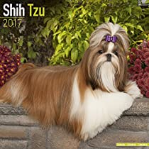 Shih Tzu Calendar 2017 - Dog Breed Calendars - 2016 - 2017 wall calendars - 16 Month by Avonside