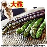 国華園 山菜苗 アスパラガス 大株満味紫R 10株