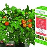 AeroGarden - Cherry Tomato Seed Kit - Red Heirloom Tomatos - AERO501