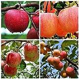 20PCS Bonsai Apple Tree Seeds Garden Yard Outdoor Living Fruit Plant Fascinating
