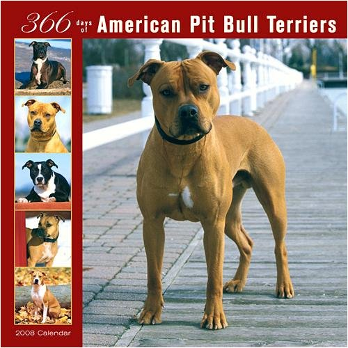 Pit Bull Terriers 366 Days Wall - 2008 Calendar - Buy Pit Bull Terriers 366 Days Wall - 2008 Calendar - Purchase Pit Bull Terriers 366 Days Wall - 2008 Calendar (Calendars, Office Products, Categories, Office & School Supplies, Calendars Planners & Personal Organizers, Wall Calendars)