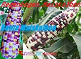 Lawn & Patio - 40x Regenbogen Mais Bunt Samen Hingucker Pflanze Seltene Getreide Sorte #59