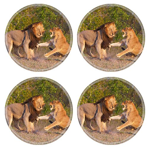 Liili Natural Rubber Round Coasters IMAGE ID 32893684 Beautiful Red Young Cat Outdoor