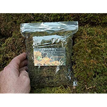 Appalachian Emporiums Moss Grow Transplant Craft 1qt Sheet Moss