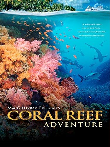 coral-reef-adventure