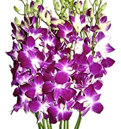 Graduation Flowers - 10 Stems Purple Dendrobium Orchid