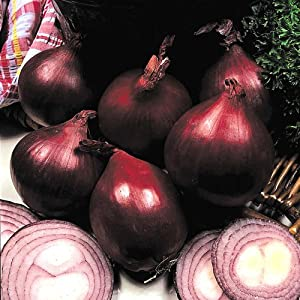 Premier Seeds Direct ONN20 Onion Red Baron Finest Seeds (Pack of 500)