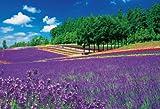 1000ピース ジグソーパズル 富良野のラベンダー畑 (49x72cm)