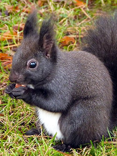 Squirrel on Amazon Prime Instant Video UK