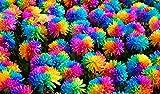 (Rainbow Ep#007) Flower Seeds 50pcs Novel Rainbow Chrysanthemum Seeds Bonsai Flower,home Gardening