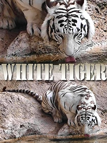 Clip: White Tiger on Amazon Prime Instant Video UK