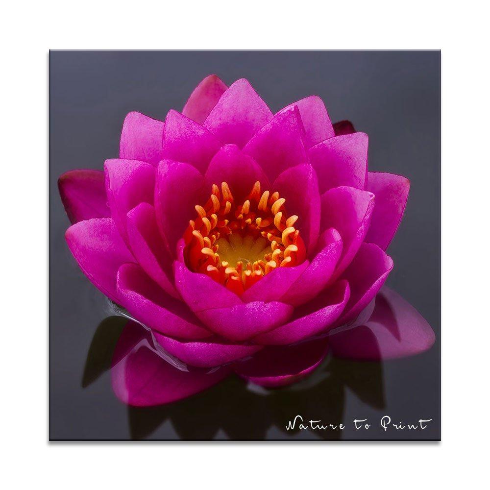 Seerose Pink Beauty im Teich als Kissen mit Füllung im Format 50 cm x 50 cm