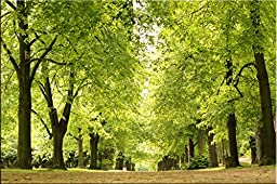 Startonight Wall Art Canvas Charming Green Alley, Nature USA Design for Home Decor, Dual View Surprise Artwork Modern Framed Ready to Hang Wall Art 23.62 X 35.43 Inch 100% Original Art Painting!