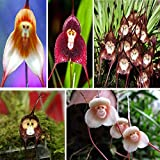 ADB Inc 10 Type 100 Seeds Orchid Seeds Monkey Face Dragons (00 Mix)