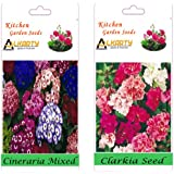 Alkarty Cineraria And Clerkia Seeds Pack Of 20 (Winter)