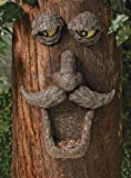 Fun Express Tree Face Wild Bird Feeder Garden Yard Decor