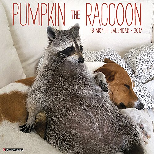 Pumpkin the Raccoon 2017 Wall Calendar