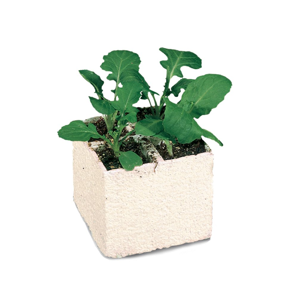 growth and development of brassica rapa plants essay