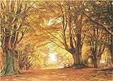 2014ピース ブナの森 20ア-27