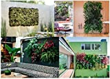 Vertical Garden Hanging Planter for an Instant Living Wall By Living Gallerie Includes 8 Root Wrappers and How-to's for Easy Installation Have Fun Creating Your Own Beautiful Living Wall Now!
