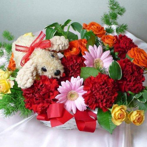 925 【お祝い 母の日 誕生日】犬のマスコットとカーネーション赤系アレンジメント