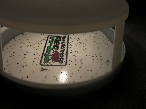 Amazon.com : Victor M230 Ultimate Flea Trap : Home Pest Control Traps