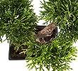 Knstlicher-Bonsai-Zeder-im-Tpfchen-ca-23-cm-hochwertiger-Kunstbonsai