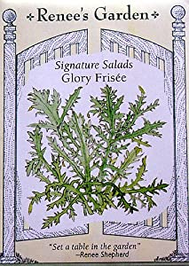 Glory Frisee Curly Endive Seeds 450 Seeds