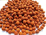 Godblessmart-Lot of 1011 Rudraksh Seeds Loose Beads, Rudraksha Beads, 8mm