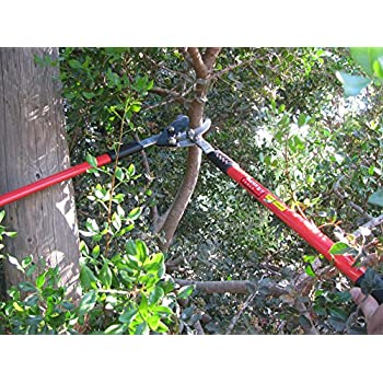 Tabor Tools GG11 Professional Compound Action Bypass Lopper, Chops Thick Branches With Ease, 1 3/4 Inch Clean-Cut Capacity, 30-Inch Tree Trimmer Featuring Sturdy Extra Leverage 22-Inch Handles.