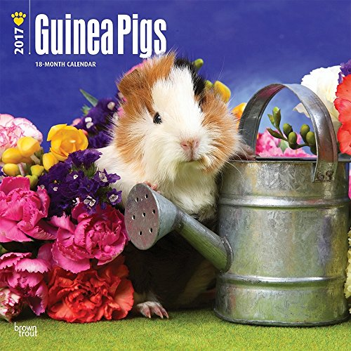 2017 Monthly Wall Calendar - Guinea Pigs