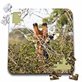 Angelique Cajam Safari Giraffes - South African Giraffe head face in the trees - 10x10 Inch Puzzle (pzl_20121_2)