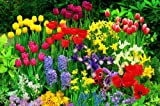 Lawn & Patio - WOLF-Garten Sport- und Spiel-Rasen LG 125; 3825020