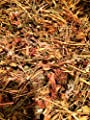 Organic Dried St. John's Worth (Hypericum Perforatum) 2 Oz.