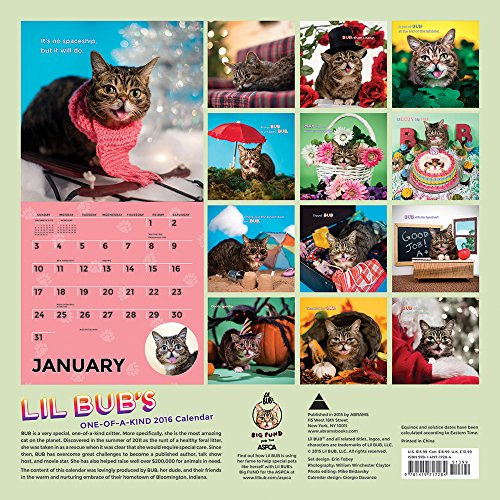 Lil Bub: 2016 Wall Calendar (Abrams Calendars)