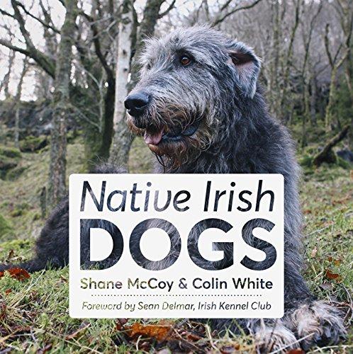 Native Irish Dogs