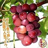 国華園 果樹苗 ブドウ クイーンニーナPウイルスフリー苗 3株