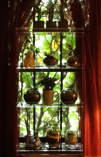 Hanging Window Plant Shelves Plant Stand