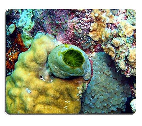 liili-mouse-pad-natural-rubber-mousepad-image-id-24812728-sea-squirt-island-maktan-philippine
