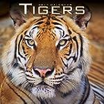 Tiger Calendar - Calendars 2016 - 201...