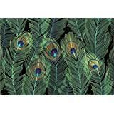 Feathers Note Cards (Stationery, Boxed Cards)